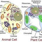 Ketahui 17 Bagian Sel Tumbuhan & Hewan serta Fungsinya